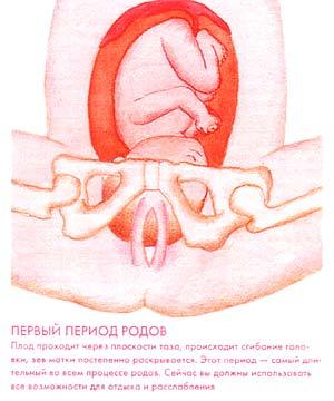 Как понять готова ли шейка матки к родам